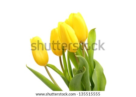 Tender lovely yellow tulips