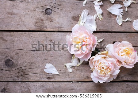 Tender pink peonies flowers on aged wooden background. Top view with copy space. Still life. Selective focus.