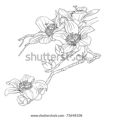 tender twig blossoming orchids on a light background - stock photo