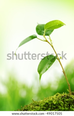 Tender young plant with water droplet on earth - stock photo