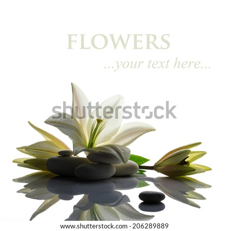 tenderness white lily with two buds and several big and small white stones on white reflection background - stock photo