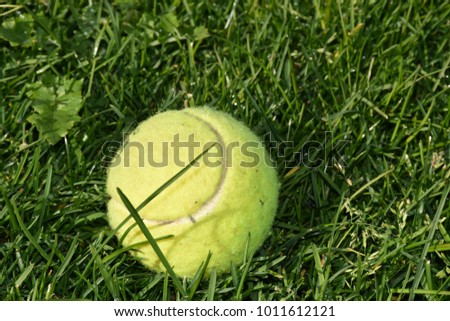 Tennis ball at the sun in the lawn