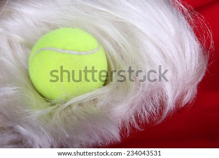 Tennis Ball on a Santa Wig and Suit; holiday tennis - stock photo