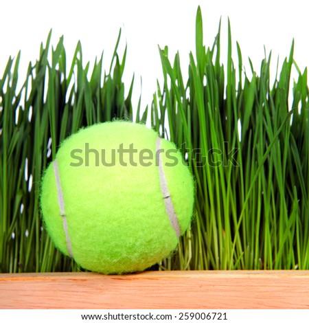 Tennis Ball on Fresh Grass background Closeup - stock photo