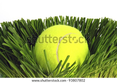 Tennis ball on the green grass.
