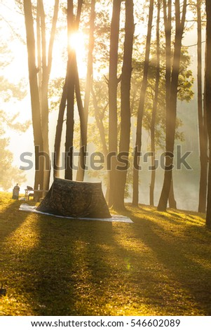 Tent at camping site by the lake at pine tree forest in the morning mist