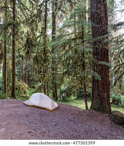Tent in the Olympic Rain Forest