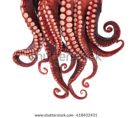 tentacles of octopus isolated on white background