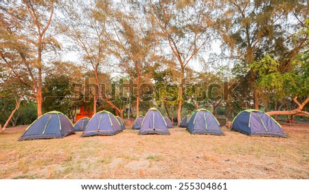 Tents on sea beach with pine forest - stock photo
