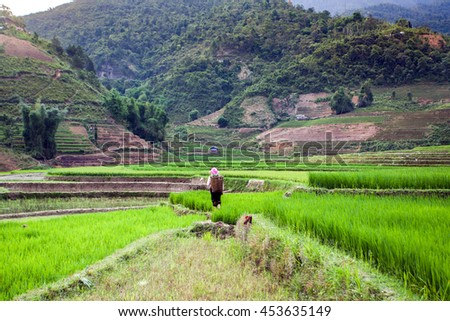 Teraced fields in Northwest, Vietnam, Here it seems like whole mountains are carved out into terraces and then rice is planted