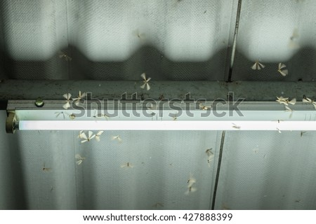Termite crowd flying around lamp lighting front house - stock photo