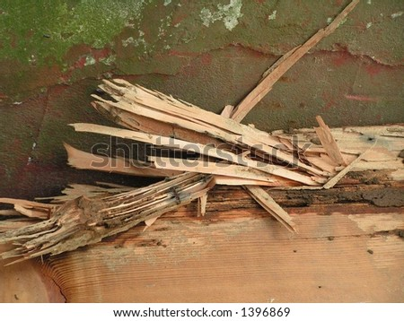 Termite Damaged Wood