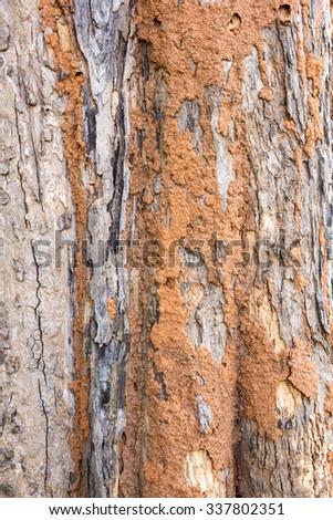 Termite nest on bark of tree - stock photo