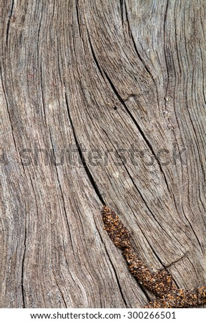 Termite nest on the old wooden