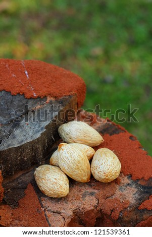 Termite nests  and betel palm