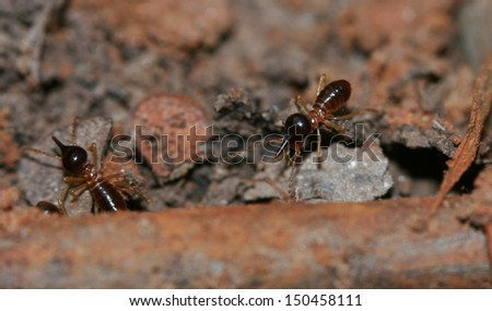 Termite on earth - stock photo