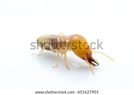 Termite Stock Images RoyaltyFree Images Vectors Shutterstock