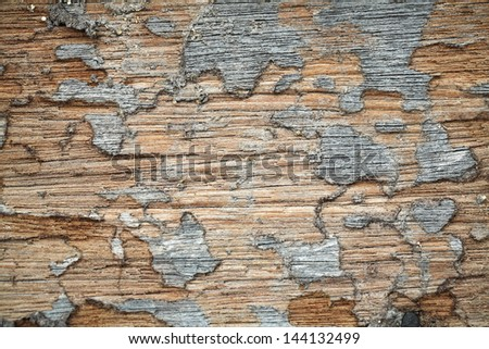 termite on wood. - stock photo