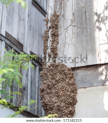 Termites eat the House - stock photo
