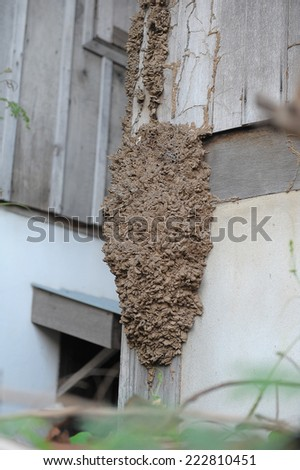 Termites eat wood House in etch - stock photo