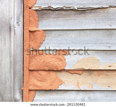 Termites eat wood wall weathering old. - stock photo