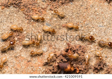 Termites help unload wood chips. - stock photo
