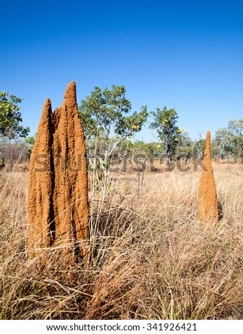Termites in Northern territory build big mounds. Different types of termites build different shapes this one is called cathedral shape - stock photo