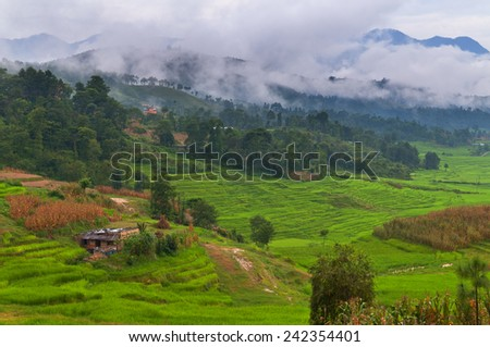 Terrace fields with corn and rice crops in Nepal.