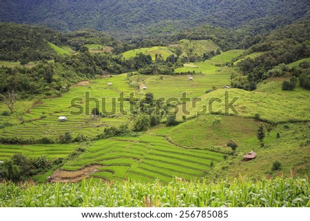 Terrace rice field over the mountain