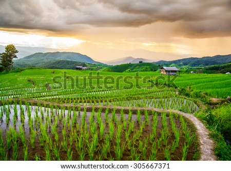 Terrace rice fields at Bann Bong Piang in Mae chaem, Chaing Mai, Thailand