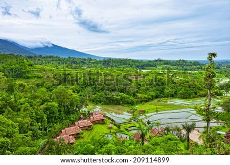 terrace rice fields, Bali, Indonesia  - stock photo