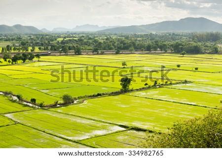 Terrace rice fields in Kanchanaburi, Thailand - stock photo