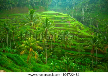 Terrace rice fields on Bali, Indonesia. - stock photo