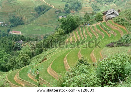 Terrace rice paddies in the mountains - stock photo