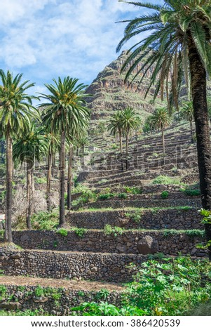 Terraced fields is a typical landscape for the Valle Gran Rey, the beautiful canyon on the Canary island La Gomera. The terraces are still used for agriculture. The valley is located on the west side - stock photo