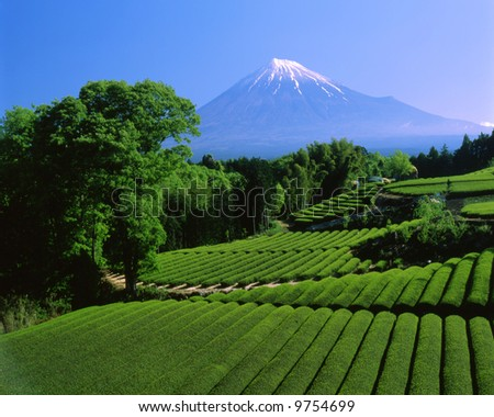 Terraced green tea fields with snow-capped Mount Fuji - stock photo