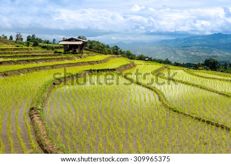 Terraced Rice Field in Chiangmai north of Thailand - stock photo