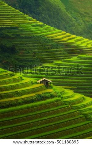 Terraced rice field in Mu Cang Chai, Vietnam near Sapa. Mu Cang Chai rice fields stretch across mountainside in Vietnam.