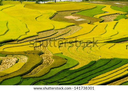 Terraced rice field in rice season in Mu Cang Chai, Yen Bai Province, Vietnam