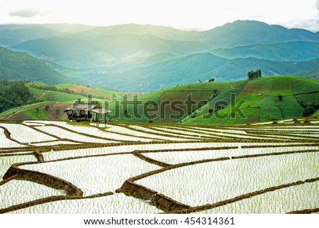 Terraced Rice Field in Thailand