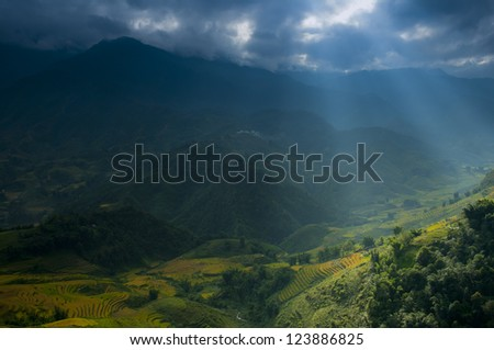 terraced rice field in Vietnam - stock photo