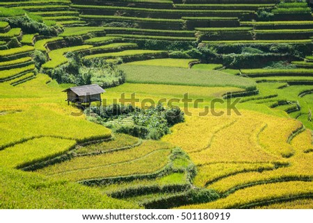 Terraced rice field landscape near Sapa in Vietnam. Mu Cang Chai Rice Terrace Fields stretching across the mountainside, layer by layer reaching up as endless, with about 2200 hectares of rice terrace