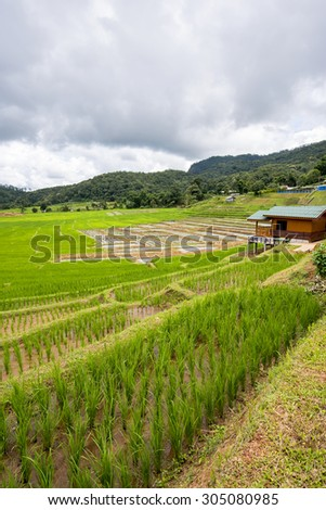 Terraced rice fields in Ban Mae Klang Luang. Chiang Mai ,Thailand.