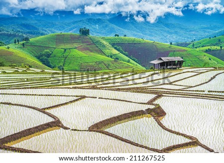 Terraced rice fields in northern Thailand ,Pa pong peang, Chiang Mai