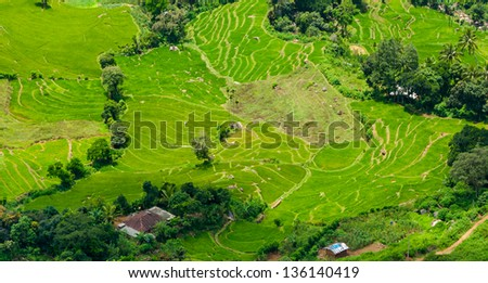 Terraced rice fields in Sri Lanka - stock photo