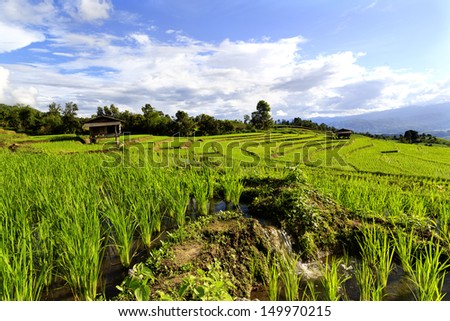 Terraced rice fields in Thailand