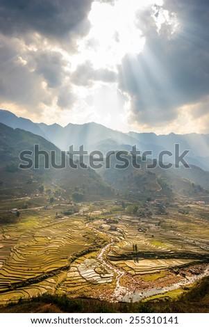 Terraced Rice Fields in Vietnam - stock photo