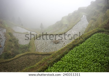 Terraced Rice Fields - Remote China - stock photo