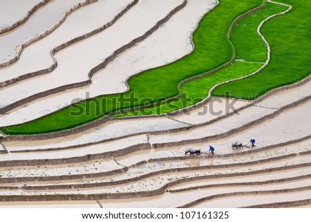Terraced rice fields - two farmers at work, the old fashion way, plowing the land with buffalo in Mu Cang Chai, Vietnam - stock photo