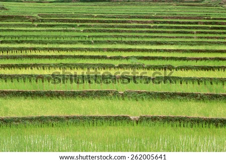 Terraced rice paddies in Kunming, People's Republic of China - stock photo
